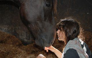 horse stables ireland