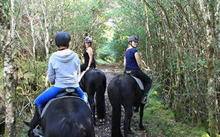 horse nature trek ireland