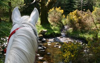 horse nature trail ireland