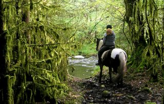 horse nature trail trek ireland