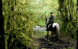 wonder-world-rinding-horse-forest