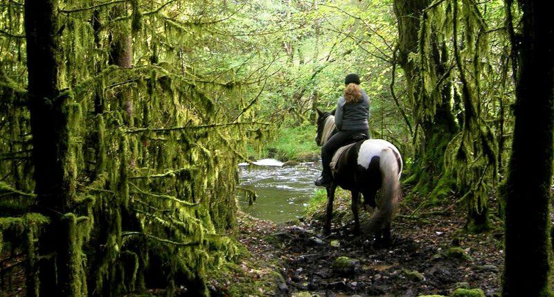 wonder-world-rinding-horse-forest