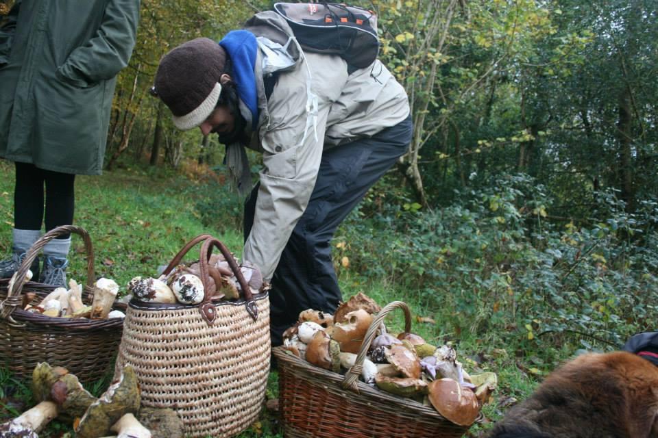 mushroom foraging in galway